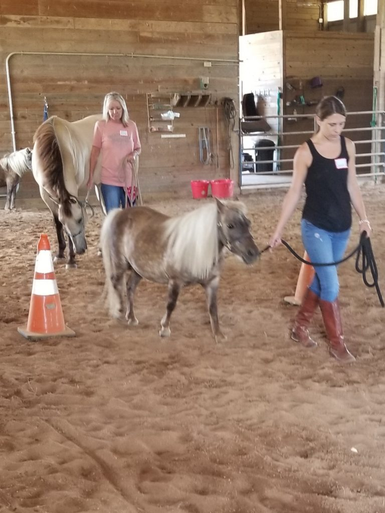 Participants with the horses.